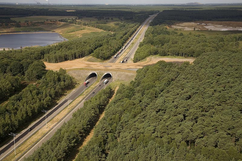 ecoducts-crossing-e314-belgium-animal-bridge-wildlife-crossing-overpass